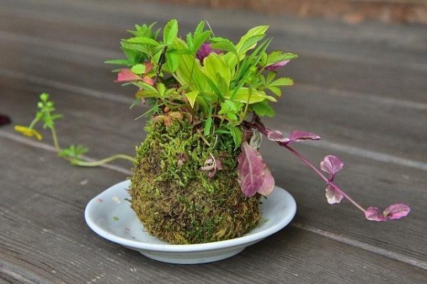 お庭が小さくても楽しめる『ミニ盆栽』!