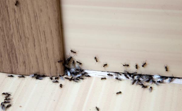 新築戸建てと虫対策について!虫対策のポイントや注意点を解説